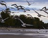 Sweep (Annette LeDuff) Tags: man bird nature water lakeerie gull foof magiceye favorited metaldetector musictomyeyes monroemi ruby2 thegalaxy sterlingstatepark loveforphotography amomentarylapseofreason ~nature yourpreferredphoto therubyawards afeastformyeyes visionaryartsgallery myspecialgallery feathersandbeaks magicuniverse dreamsilldream flickraward5 floorprimus meupaísémycountryismipaíses oceansoftalent galleryofexcellentpictures ruby5 ruby15 photoannetteleduff annetteleduff newforceofphotography certifiedphotographerlevel1 includedingalleries topphotoexpertlevel2 blinkagain1 thelooklevel1red thelooklevel2yellow thelooklevel3orange thelooklevel4purple ourwonderfulandfragileworld thelooklevel5green thelooklevel6blue thelooklevel7white thelooklevel8gold twozweideuxduedva2 redcarpethalloffamelevel3 super~sixstage2silver super~sixstage3gold super~sixstage4art super~sixstage5elite super~sixstage6andromeda50 super~sixstage1bronze 09232012
