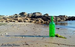 botella verde (Luis Diaz Devesa) Tags: espaa paisajes tree verde green nature water spain agua rboles europa galicia galiza pinos pontevedra illadearousa isladearosa carreirn parquenaturaldecarreirn luisdiazdevesa