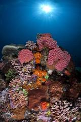 wide angle crystal rock (samui13coconut13) Tags: fish coral ray angle wide sigma diving cleaning frogfish reef 15mm manta sunfish mola komodo