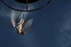 Hummingbird (Poppa-D) Tags: removedfromstrobistpool incompletestrobistinfo seerule2
