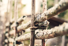 Bjurkers forngrd (netzanette) Tags: autumn heritage fall fence 50mm nikon sweden bokeh hlsingland d80 nikond80 grdesgrd forngrd bjurker bjurkersforngrd
