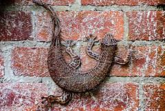 Wall Lizard!! (BGDL) Tags: lightroomcc nikond7000 afsnikkor55200mm1456g bgdl garden wall gardendecoration lizard 7daysofshooting week3 metallic wornandweatheredthursday