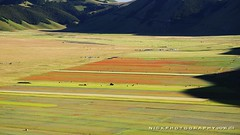 Rolling in the great plain (_Nick Photography_) Tags: img6792 nickphotography montisibillini nationalpark haymaking landscape blooming flowering colors beauty