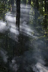 Smoke In The Forest (James_Potter) Tags: tree trees smoke forest light sun rays green