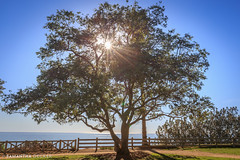 A Tree in Palisades Park (Samantha Decker) Tags: ca california canonef1635mmf28liiusm canoneos6d pacificocean palisadespark samanthadecker santamonica socal tree