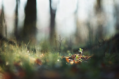 The beginning (Tammy Schild) Tags: woods forest nature trees light bokeh blur growth morning