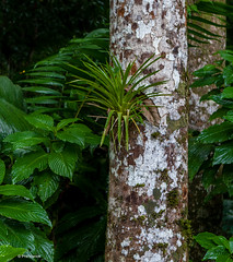 rain jungle flora of Selva Verde - Sarapiqui, Costa Rica (Phil Marion (50 million views - thanks)) Tags: philmarion 5photosaday beauty beautiful travel vacation candid beach woman girl boy wedding people explore  schlampe      desnudo  nackt nu teen     nudo   kha thn   malibog    hijab nijab burqa telanjang  canon  tranny  explored nude naked sexy  saloupe  chubby young nubile slim plump sex nipples ass hot xxx boobs dick dink