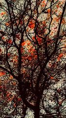 rbol de los sueos (ojoadicto) Tags: arbol tree ramas troncos orange naranja red rojo vertical artisticphotography