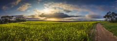 Callington Panorama (Michael Waterhouse Photography) Tags: