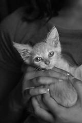 girl holding kitten (abbey cowan) Tags: blackandwhite kitten cat naturallight canon canon5dmarkiii canon70200mm