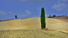 Landscape in Tuscany (flowerikka) Tags: italy toskana tuscany valdorcia zypressen hills montalcino sky landscape