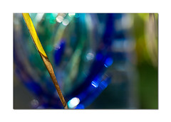 Abstract (hehaden) Tags: frond palm leaf glass decoration garden bokeh sussexprairies sussexprairiegarden henfield sussex macro