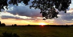 Rykowisko (maciey24) Tags: nature tree plant drzewo ka pola zachd soca sunset clouds chmury wieczr evening niebo