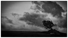A tree on a rock (cliveg004) Tags: lonetree hawthorn rock wales arthog northwales snowdonia hillside mawddachestuary dolgellau bw monochrome blackandwhite nikond5200 1685mm rural grassland