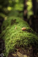Baumstamm mit Moos (stefanueberlein) Tags: baum baumstamm moos nikon makro wood holz wald forest hessen schwalm germany natu natur nature landschaft landscape