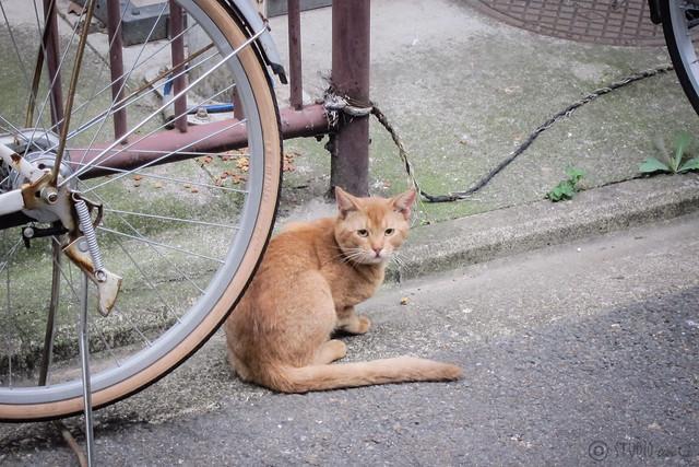 Today's Cat@2012-08-29
