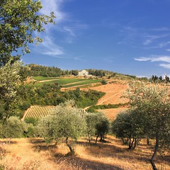 Tuscany where olives and grapes meet (Bn) Tags: red summer italy sun sunlight holiday colour green leaves florence topf50 cherries strada italia day berries bright wine small grow dry visit hills clear vineyards tuscany grapes olives chianti fields strong farms wildflowers siena taste roads radda product toscane region topf100 plums fruity greve produced rubby vino flourish discover wijn bottling sangiovese cellars cultivated classico castellina hillsides harmonious 100faves 50faves
