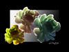 Rosa del Sud (ღLauraDestroღ) Tags: flowers color nature photoshop canon photo rosa digiart fiori puglia sud digitalfineart creattività