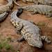 Primeiro visitamos a criacao de croc-crocs...