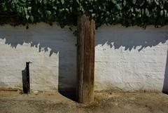 IMGP8370-stavrosstam (stavrosstam) Tags: tree leaves power pole sureal
