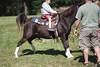_MG_4420-96 (k.a. gilbert) Tags: horse penis outside outdoors dick naturallight cock pony handheld fullframe manualfocus wideopen coggeshallfarm hunglikea manualaperture rokinon85mmf14 canon5dc