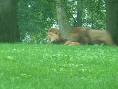 """Longleat Safari Park • <a style=""""font-size:0.8em;"""" href=""""http://www.flickr.com/photos/81195048@N05/8017667844/"""" target=""""_blank"""">View on Flickr</a>"""