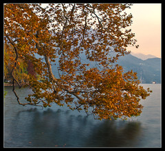 Lugano,  Parco Civico. Switzerland. Octobre 27,2010.No.300 d (Izakigur) Tags: longexposure autumn trees mountains alps green nature leaves yellow liberty gold schweiz switzerland tessin ticino nikon europa europe flickr suisse suiza swiss feel lac 1755mmf28g d200 helvetia nikkor svizzera lugano lepetitprince ch dieschweiz musictomyeyes  sussa 1755 suizo myswitzerland lasuisse nikond200 nikkor1755f28  nikon1755f28g parcocivico izakigur suisia laventuresuisse bestcapturesaoi izakigur2010 izakigurlugano svizzeradieschweiz