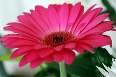 Flower (ASG_photos) Tags: hennysgardens