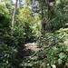 La vegetazione di Rio Claro