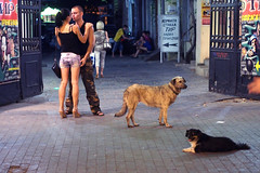 (Che-burashka) Tags: street people love dogs night evening couple candid odessa ukraine stray omd ukrainians em5 olympus45mmf18