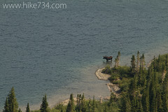 """Moose in Bullhead Lake • <a style=""""font-size:0.8em;"""" href=""""http://www.flickr.com/photos/63501323@N07/8048282357/"""" target=""""_blank"""">View on Flickr</a>"""