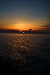 "vieni con me (wallace39 "" mud and glory "") Tags: sunset sea sky seagulls tramonto mare cielo gabbiani flickraward sognidreams"