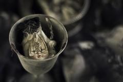 the last masquerade (sp_clarke) Tags: halloween dead doll antique moth eerie creepy dollhead