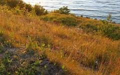 jastrzebia gora cliff meadow (kexi) Tags: meadow afternoon grass sea water balticsea jastrzebiagora pomorze pomerania poland polska polen polonia pologne canon june 2015 baltic cliff instantfave wallpaper