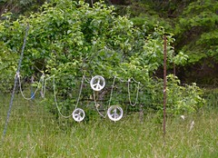 PEACE, HFF (shireye) Tags: peace hff happyfencefriday fence hornbyisland bc britishcolumbia vancouverisland comoxvalley