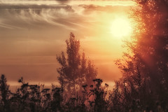 A warm harmony... (BigWhitePelican) Tags: helsinki finland malminkartanonmki sun sky morning silhouettes canoneos70d adobelightroom6 niktools 2016 august