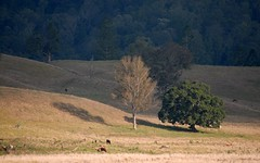 near Pine Creek (dustaway) Tags: landscape backcreekvalley northernrivers nsw richmondvalley australia australianlandscape ruralaustralia rurallandscape winter hillsides trees shadows cloudshadow light sunlitground paddocks