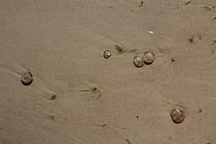 5 Wochen auf Usedom  2026 (Fotodesaster55) Tags: insel inselleben strand wasser baltic sea ostsee wetter wolken möwen bäume kiefern altes neuen rost kormorane muscheln leuchten kristall horizonte
