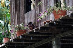 _NGE7732.jpg (Nico_GE) Tags: selvahumedatropical colombia sancipriano pacifico comunidadesafro valledelcauca co