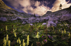 A summer morning in the Alps (Croosterpix) Tags: alps nature landscape summer flowers mountains