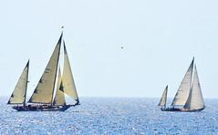 Vele d'Epoca 2016 (092) (Pier Romano) Tags: vele epoca imperia 2016 yacht velieri barche boat ship old antiche regata panerai classic yachts challenge liguria italia italy riviera ligure nikon d5100