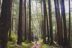 (danielleelon) Tags: limekiln limekilnstatepark redwoods california centralcoast forest sequoia