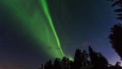 Follow the green line (JH') Tags: nikon nikond5300 nature northernlights d5300 summer sky sigma trees 1020 2016 sweden auroraborealis aurora borealis stars tree heaven landscape