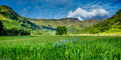 Standing proud! (dazzbo1) Tags: tree mountains flowers colour beautiful magnificent cumbria lakes district view grass rock lake blue sky cloud