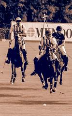 20160814183000 (Federico Alberto) Tags: santamarapoloclub polosotogrande sotograndepolo es espagne espaa polo sotogrand spain olympus omd em1 panasonicleicadgvarioelmar100400mmf463asph horses caballos chevaux cdiz andalusia dubaipoloteam goldcup nophotoshop nohdr