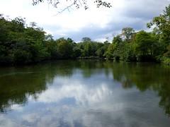 Bayard Cutting Fields Arboretum (73) (pensivelaw1) Tags: suffolkcounty newyorkstate longisland bayardcuttingarboretumstatepark