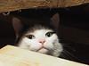 Zrzeszenie Słowian (arjuna_zbycho) Tags: słowianie rodzimowierstwosłowiańskie słowiańskatożsamość slavs slawen slované славя́не przybyłówka zrzeszeniesłowian wieśsól kir kater hauskatze cat animal cute animals pets gato kitten feline kitty kittens pet tier haustier katzen gattini gatto chat cats