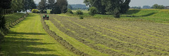 Hay raking (Mark A.H.) Tags: hay hooi raking schudden cow koei landscape landschap tractor trekker panorama hek fence water dike dijk licht light schaduw shadow tree boom