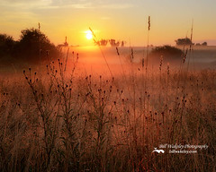Morning Glow 2016 (Bill Wakeley) Tags: morningglow sunrise ehterealsunrise silhouette silhouettes orange golden newengland newenglandlandscape newenglandlandscapes thesun summer summersunrise fog foggy pasture pastures pastoral mystical peacful connecticut connectionlandscape connecticutlandscapes grass wheat wilflower wildflowers glow glowing morninglight warmlight billwakeley