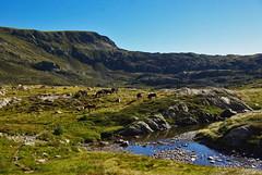 Rando au cirque de Bassis (Arige) (PierreG_09) Tags: arige pyrnes pirineos montagne lac tang lake lago bassis escale cheval troupeau estive transhumance
